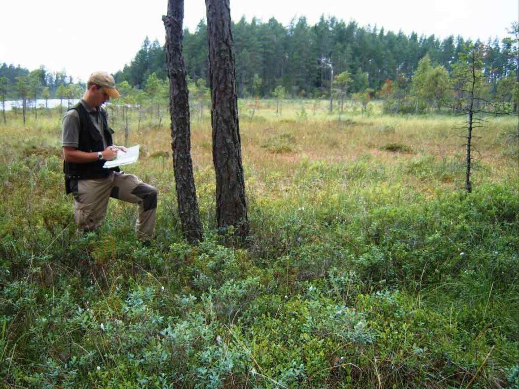 Bild på miljörevision för certifierat skogsbruk enligt FSC (Forest Stewartship
